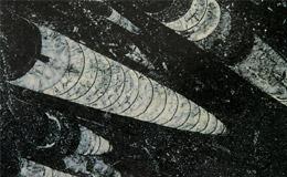 black-fossil-177