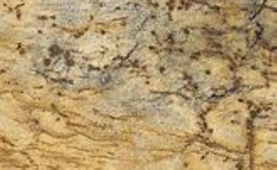 lapidus-gold-5804